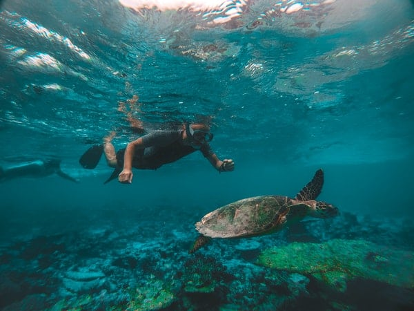 man snorkeling with turtle