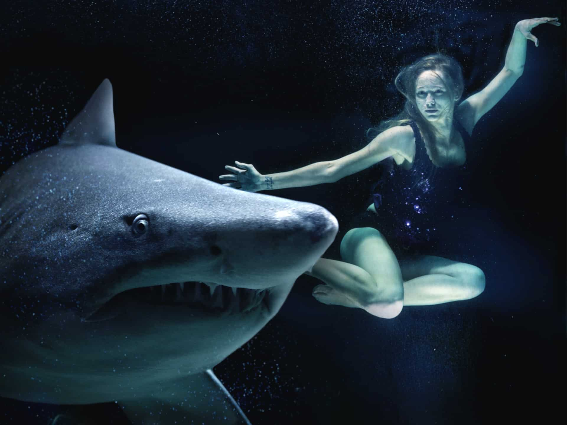 woman diving with shark