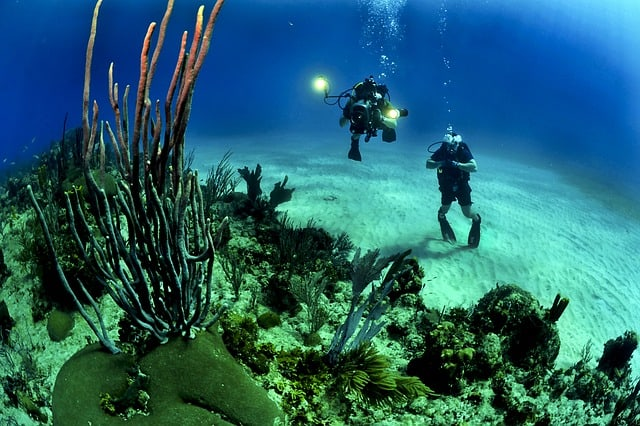 scuba diver is wearing the oceanic scuba gear while diving at the deep blue sea