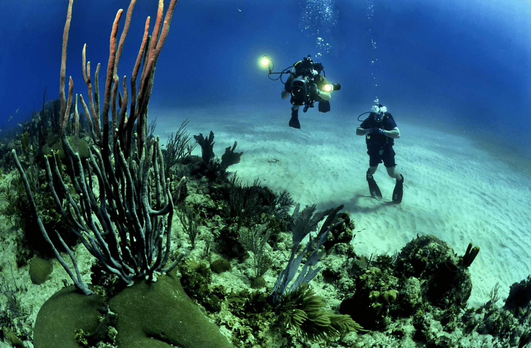 divers under the water