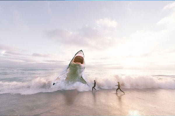 shark sea ocean water fish